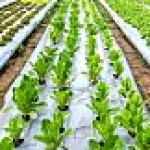 Agriculture & Farming; solution to unemployment in Nigeria and Africa?