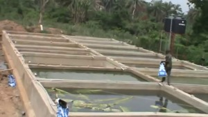 Catfish farming in Nigeria, Pond