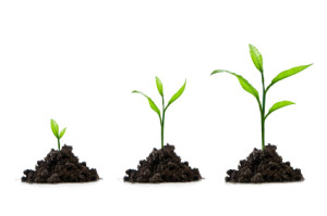7 Tips on How to Grow Your Small Business