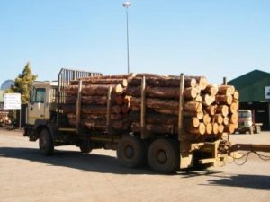 logging-on-truck