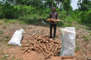 Cassava Farming & Gari Processing Method in Nigeria