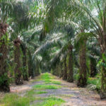 Palm Oil Production Business in Nigeria (How to start & make money)