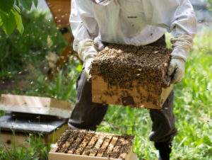 Beekeeping In Nigeria; 7 steps to start & make good money (+ Practical training)