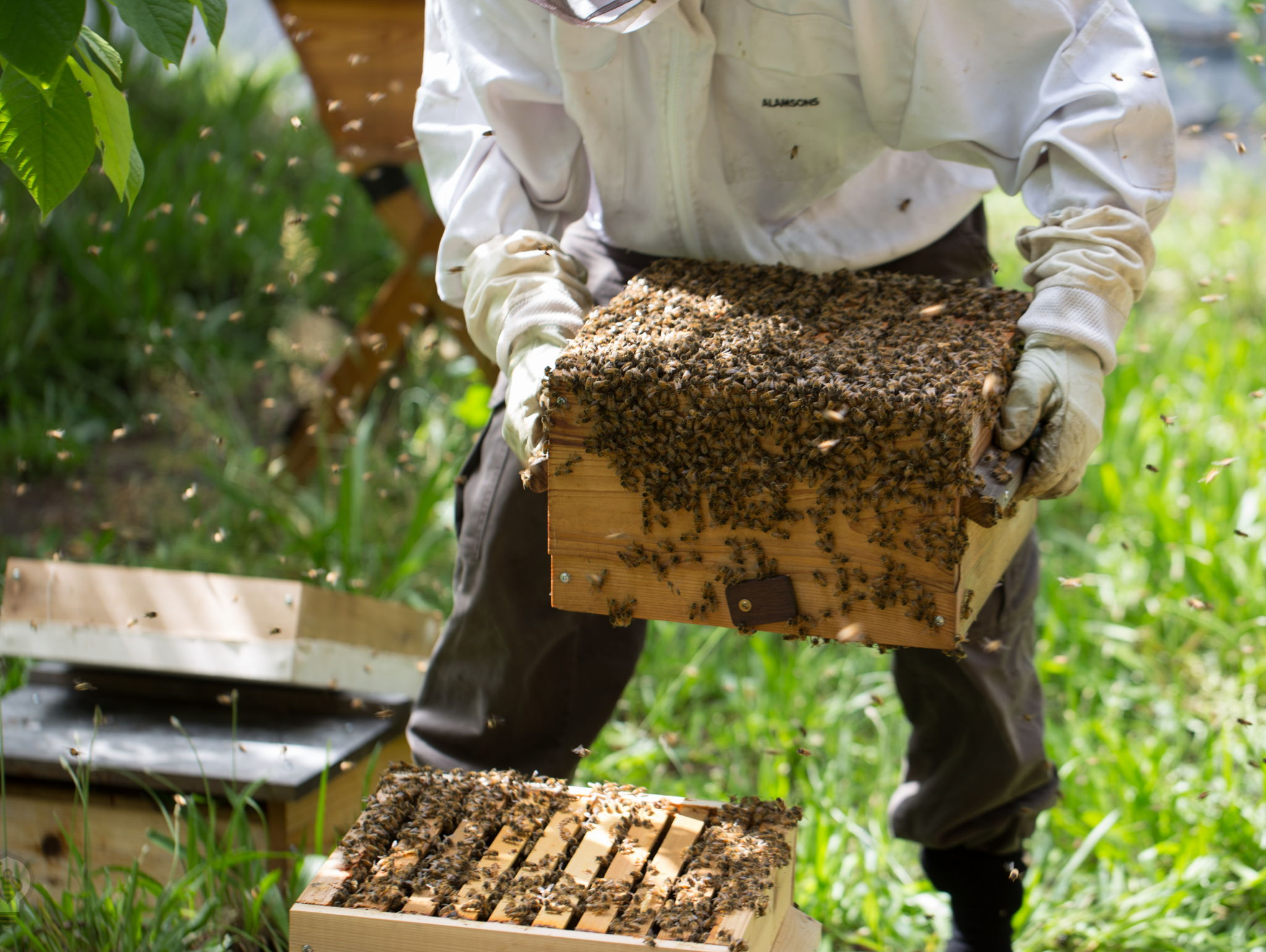 Bee Keeping in Nigeria