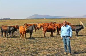 9 Most Profitable Livestock Farming/Animal Husbandry in South Africa (+training & PDF)