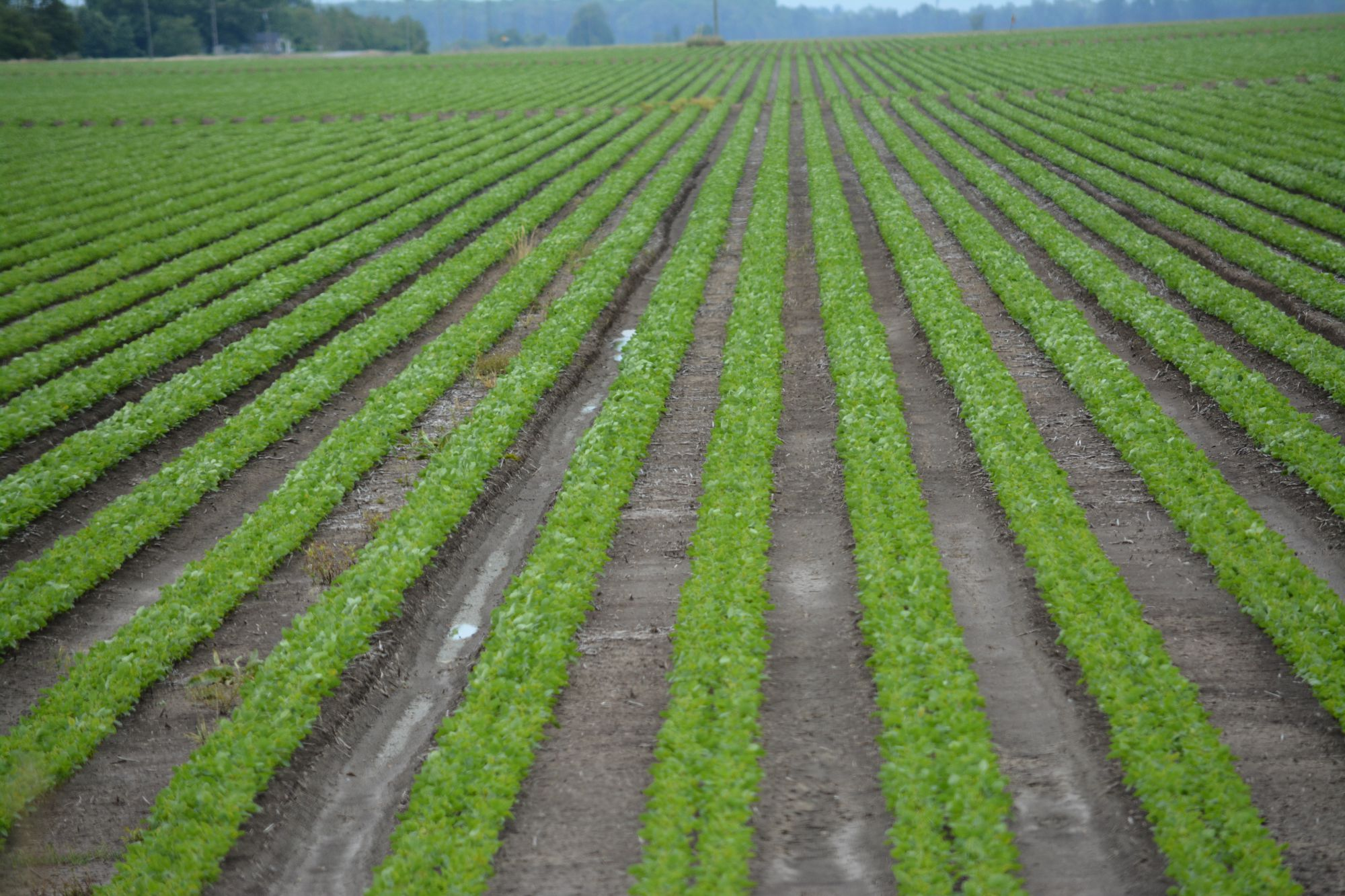 Crops farming in Nigeria